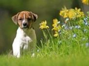 Знаете ли вы, какие эмоции испытывает ваша собака?