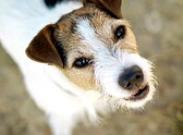 Хорошие манеры вашей собаки
