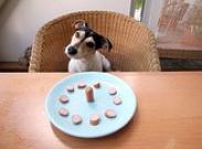 Натуральное питание собаки. Как приготовить кормосмесь, которую можно хранить в морозилке?