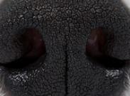 Тревожные симптомы у собаки. Когда начинать беспокоиться?